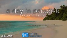 A DAY IN PARADISE 4.5 Hour Ambient Nature Film + Calming Music – Fiji Islands  [Remastered] 4K