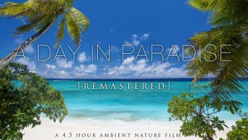 A Day In Paradise (No Music) 4.5 Hour Pure Nature Relaxation Film – Fiji HD [Remastered 4K]<div class='yasr-stars-title yasr-rater-stars-visitor-votes'                                           id='yasr-visitor-votes-readonly-rater-ef846997c9530'                                           data-rating='0'                                           data-rater-starsize='16'                                           data-rater-postid='5904'                                            data-rater-readonly='true'                                           data-readonly-attribute='true'                                           data-cpt='posts'                                       ></div><span class='yasr-stars-title-average'>0 (0)</span>