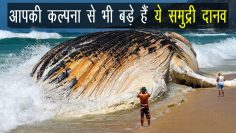 Biggest sea creature in the world in Hindi | Ocean Animals