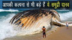 Biggest sea creature in the world in Hindi | Ocean Animals