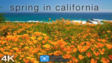 Spring in California: 4K 1 Hour Dynamic Real-Time Ambient Nature Film + Ocean Sounds for Relaxation<div class='yasr-stars-title yasr-rater-stars-visitor-votes'                                           id='yasr-visitor-votes-readonly-rater-99d85e363f79b'                                           data-rating='0'                                           data-rater-starsize='16'                                           data-rater-postid='5879'                                            data-rater-readonly='true'                                           data-readonly-attribute='true'                                           data-cpt='posts'                                       ></div><span class='yasr-stars-title-average'>0 (0)</span>