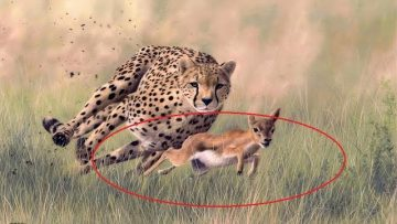 Fastest Creatures On Earth – Fastest Animals World | Predator (Nat Geo)<div class='yasr-stars-title yasr-rater-stars-visitor-votes'                                           id='yasr-visitor-votes-readonly-rater-2d548d11607b9'                                           data-rating='0'                                           data-rater-starsize='16'                                           data-rater-postid='7145'                                            data-rater-readonly='true'                                           data-readonly-attribute='true'                                           data-cpt='posts'                                       ></div><span class='yasr-stars-title-average'>0 (0)</span>