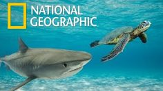 Great Barrier Reef | Queensland Australia Wildlife – Great Natural Wonder (Nat Geo)